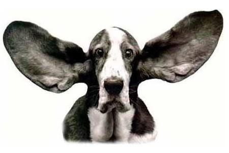 due orecchie una sola bocca